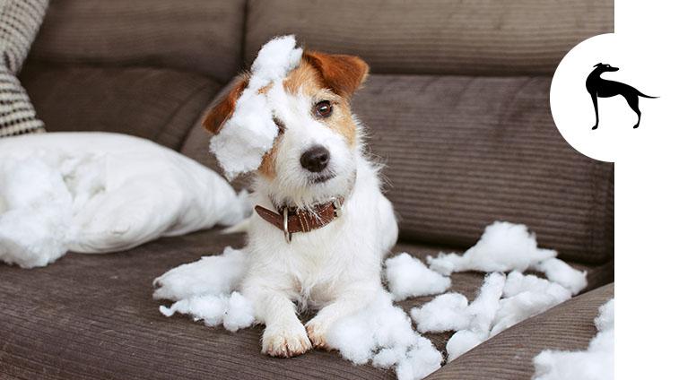 cane morde tutto