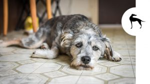 Come capire se il tuo cane è stressato e cosa fare