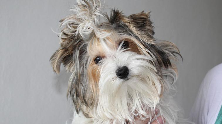 Integratori per il pelo del cane