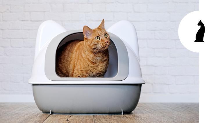 Lettiera per gatti come scegliere quella giusta