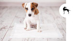Tappetini e traversine per cani: tutto quello che devi sapere