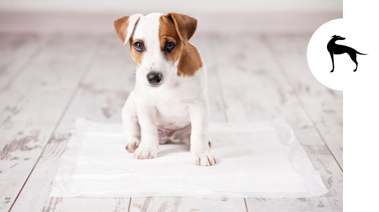 Tappetini e traversine per cani