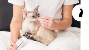 Fermenti lattici per gatti: ecco cosa devi sapere