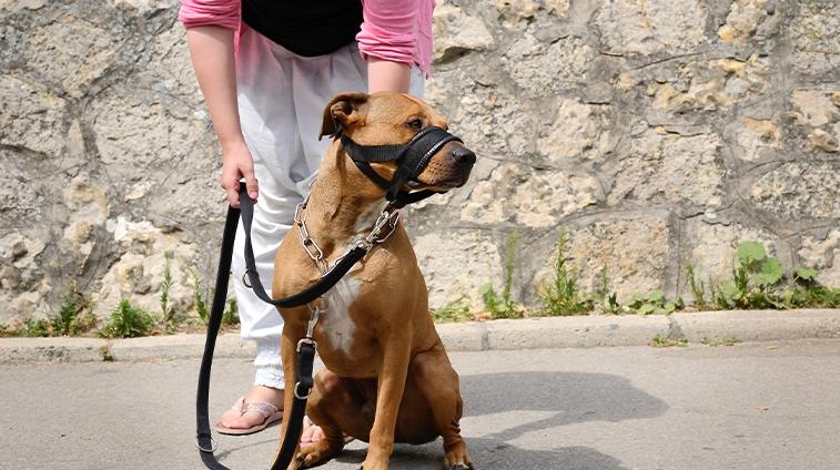 legge museruola cani
