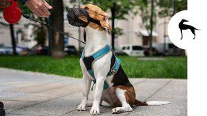 Museruola obbligatoria per i cani: cosa dice la legge