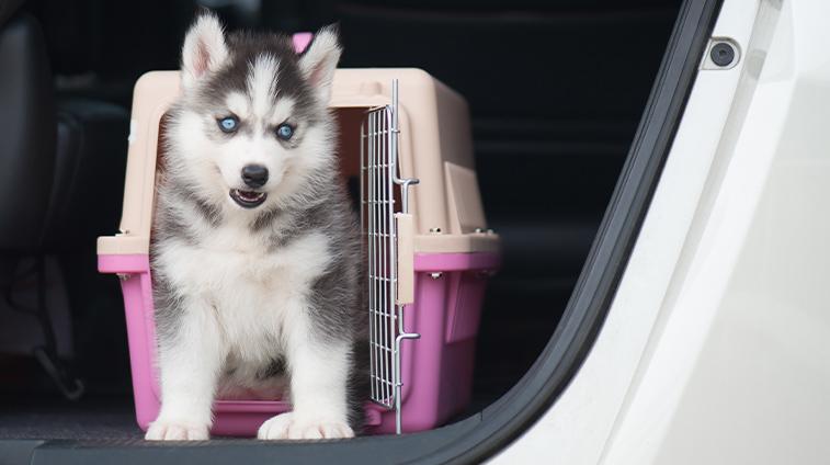 trasporto animali domestici in auto