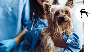Viaggiare con il cane in Italia e in Europa: passaporto e vaccinazioni necessarie