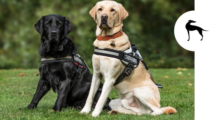 Accessori per cani: pettorine, guinzagli e collari, il set perfetto per le vostre attività