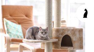 Come scegliere il tiragraffi per gatti: un accessorio indispensabile per giocare e affilare gli artigli