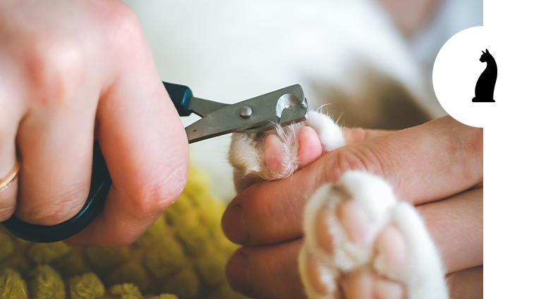 Quando tagliare le unghie al gatto