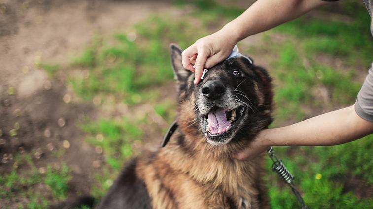 salviette per cani alla clorexidina