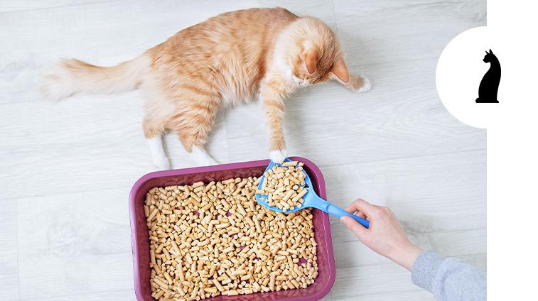 Come pulire la lettiera del gatto