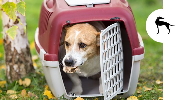 Trasportino per cani: guida alla scelta