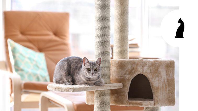Come scegliere il tiragraffi per gatti