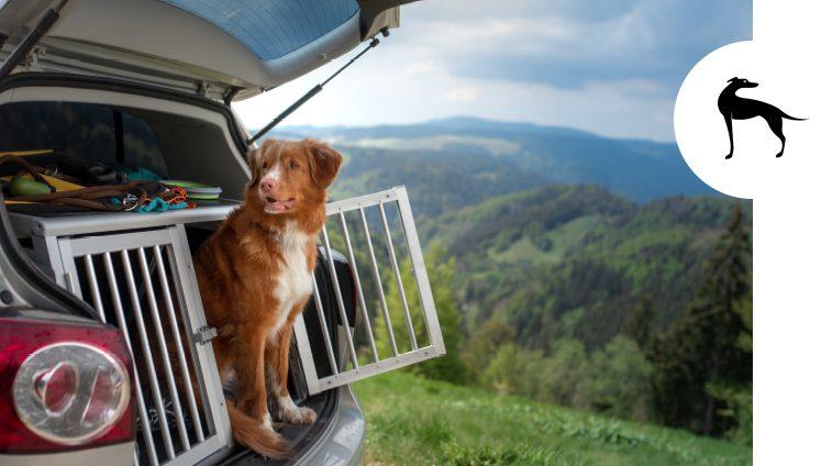 Trasportare animali in auto